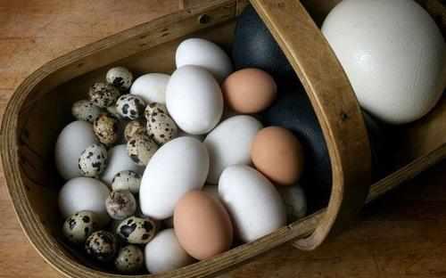Срок годности яиц со скорлупой