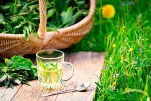 Чай из крапивы в прозрачной чашке