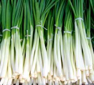 Свежесорванный зеленый лук