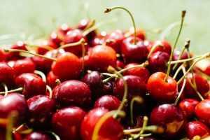 Спелые и не дозревшие ягоды черешни