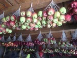 Яблоки в связках на капроновой нити