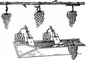 Методы хранения винограда