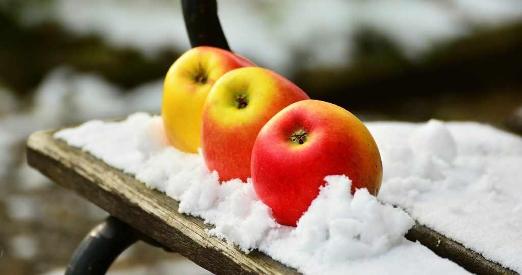 Яблоки зимой