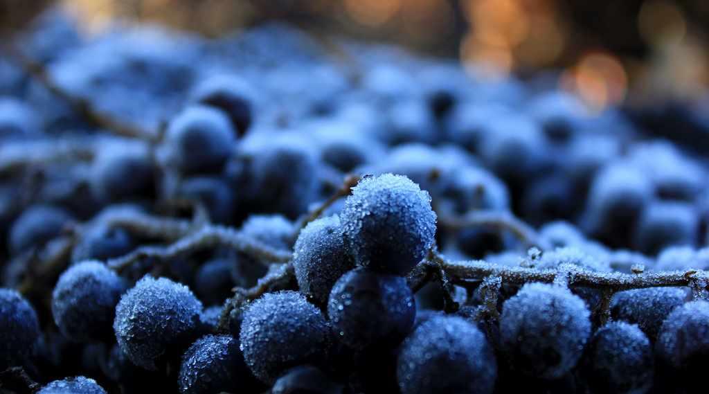 Замороженный виноград