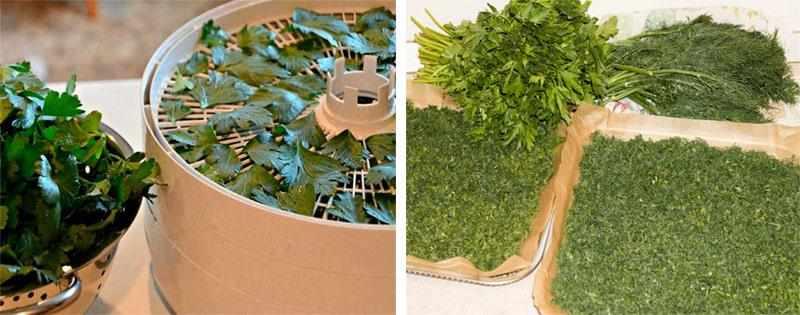 Варианты сушки зелени