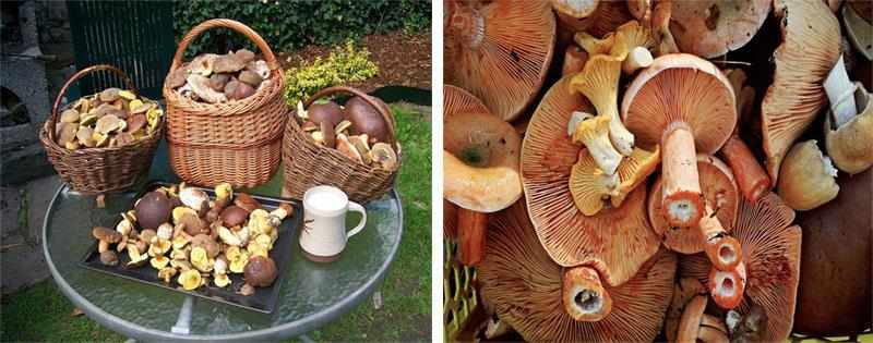 Сбор и сушка грибов