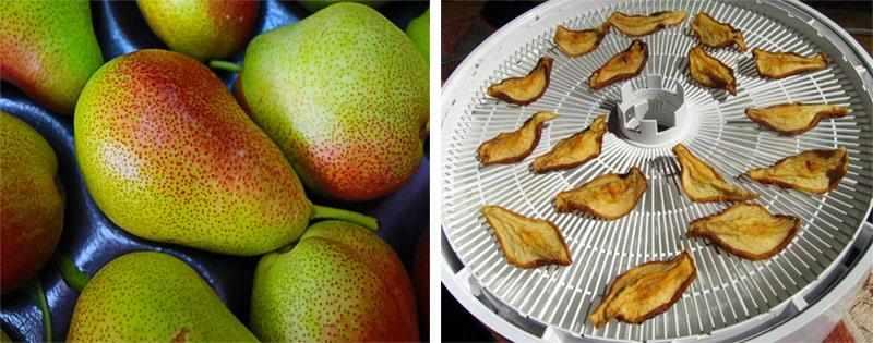 Заготовка сушеной груши