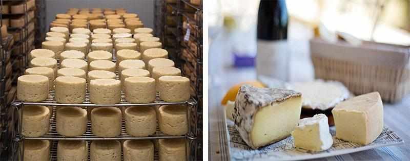 Заморозка различных видов сыра