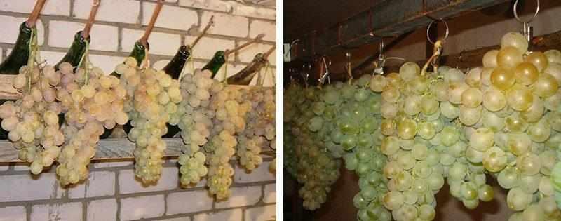 Виноград в погребе
