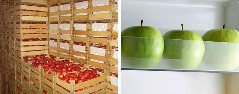 Как сохранить яблоки свежими