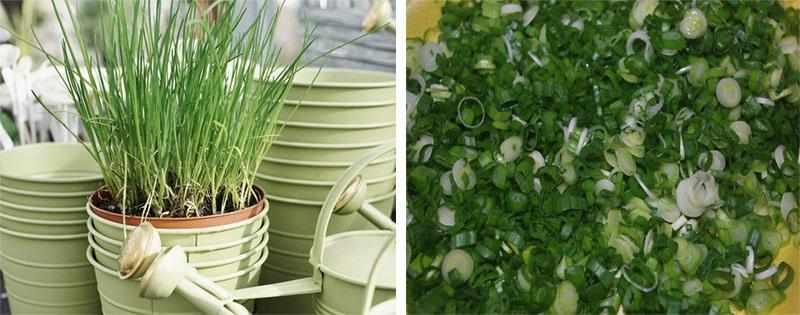Зелёный лук