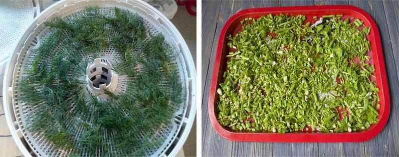 Сушка и заготовка зелени