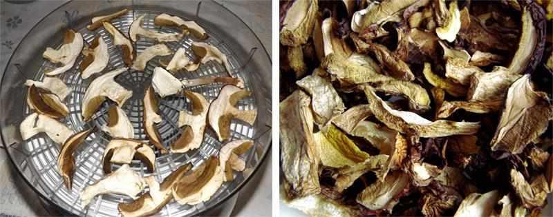Сушеные грибы в электросушилке