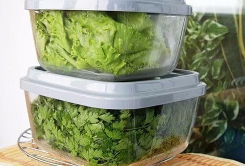 Зелень в контейнере