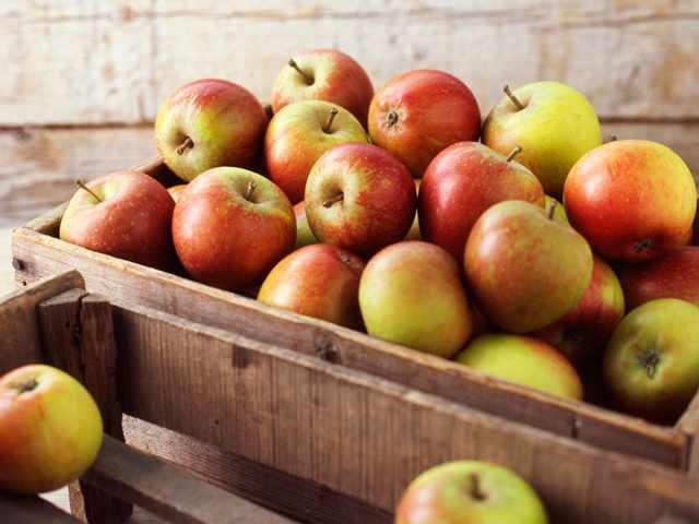 Как првильно хранить яблоки в домашних условиях