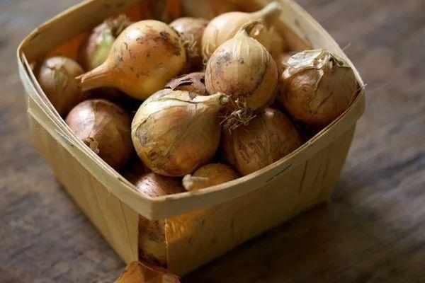 Как хранить лук: лучшие способы