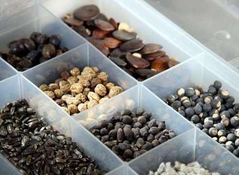 Как правильно выбрать семена для посадки ?