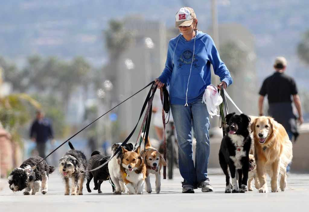 Как правильно гулять с собакой