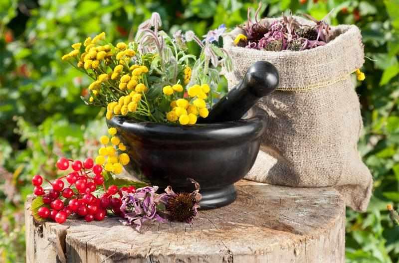 Как правильно собирать и хранить лечебные травы?