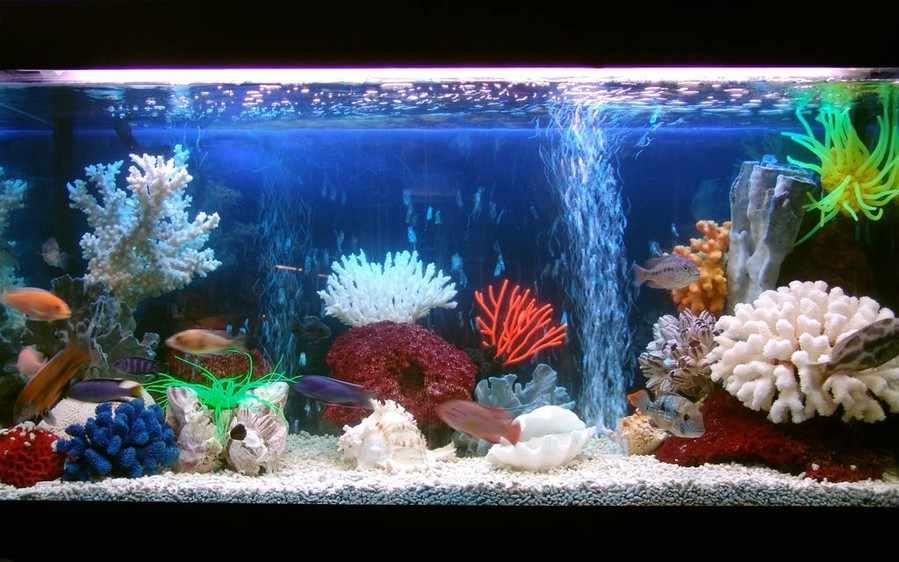 Как правильно ухаживать за рыбками в аквариуме?