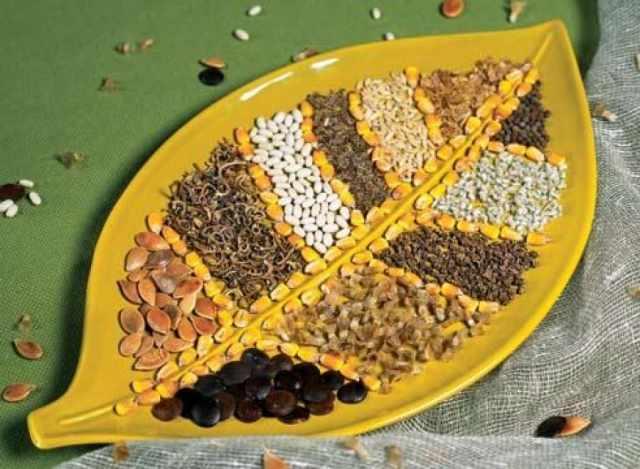 выбрать семена и подготовить их для посева