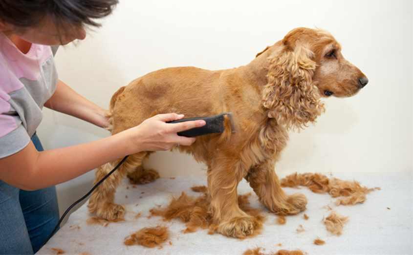 Как правильно стричь собак