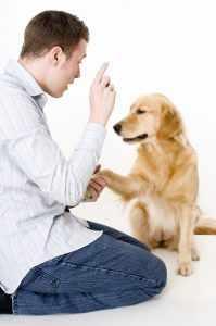 Как правильно воспитывать щенка