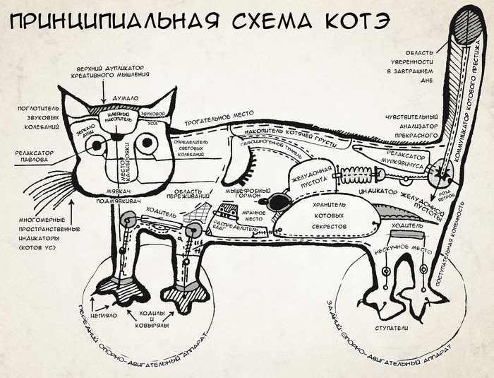 котофизиология