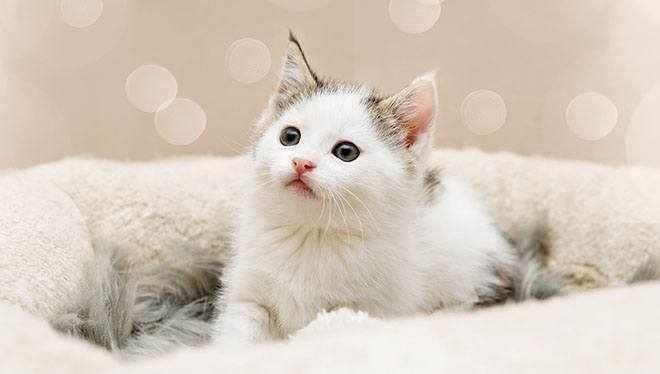 котенок в лежалке